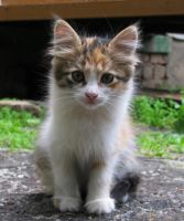 Homeless Kitten by DeingeL