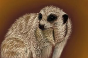 Meerkat study by fluffylovey