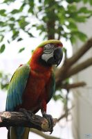 Scarlet Macaw by LifeThroughALens84