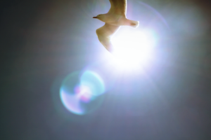 the sun and the seagull. by jazza-v
