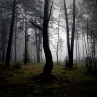 foggy forest by BrokenLens