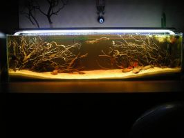 Untitled12 gallon Blackwater Aquarium by Beastysakura