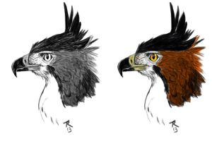 Ornate Hawk Eagle by aetherfang