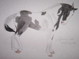 American Paint Horse by Raiha