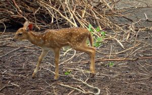 A baby deer by artbhatta
