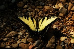 Riverside Beauty by Lynalee
