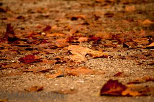 Autumn Leaves by oEmmanuele