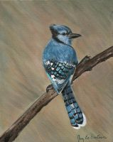 Blue Jay by 3ampainter