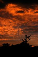 Fire in the Sky by Jacob-Routzahn