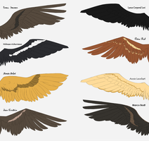 SnK Wings (1/2) by Fayolinn