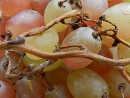 Grapes stock photo by BrunaVosto
