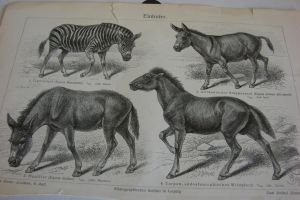 Lithograph FOR SALE or TRADE: Wild Horses by Lot1rthylacine