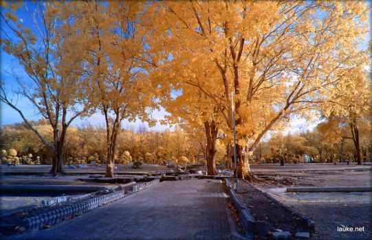 Holy Trees infrared by MichiLauke