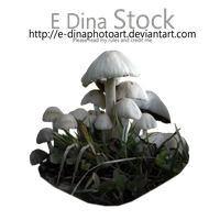 PNG Stock Mushrooms by E-DinaPhotoArt