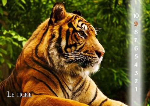 25 - The tiger by Varagh