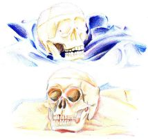 Skull Studies by Platynews