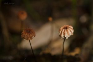 Parasols by dandilionseed