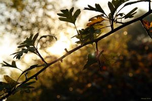 October light by George---Kirk