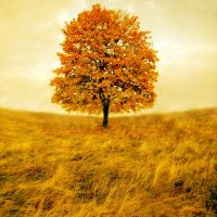 autumn tree by all17