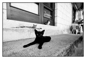 cats of Dubrovnik 12 by lightdrafter