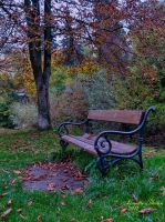 lonely bench in the park by Alouette-Photos