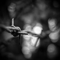 Fenced in by RickHaigh