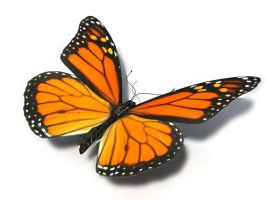 Butterfly Model 1 by Xanatos4