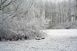 winterland 12 by priesteres-stock