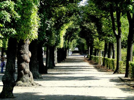 tree alley by andr33aa