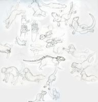Swamp Cat Sketches by Luherc
