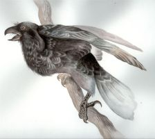 The Raven by HanMonster
