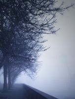 Trees in Fog by EphyLiami