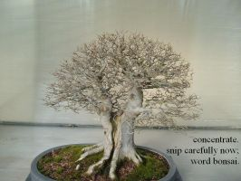 pruning back: a haiga by deinktvis