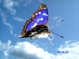 butterfly 3D by Krumas