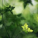 sunny little world by prismes