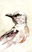 Bird sketch with Watercolor by dfbovey