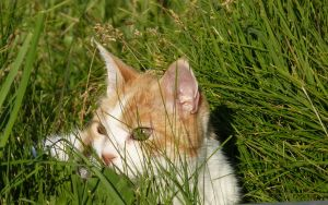 lurking in the grass by Beausoliel