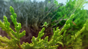 green spider hd by kartine29
