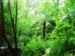 The Forest Greens by flarglesnargle