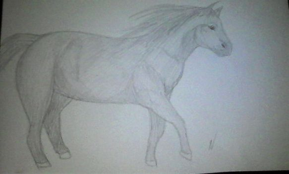 Horse Drawing by Naelvy