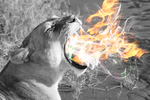 Fire Breathing Lioness by Royablez