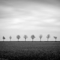 the Lemon trees by matze-end