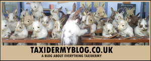 Taxidermy Blog NOW LIVE by EternalEmporium