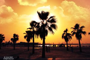 Palms on Marina Beach by Louayr