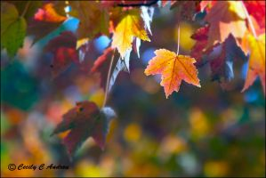 Autumn In The Air by CecilyAndreuArtwork