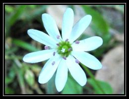 White Flower by Coded Dream by Tap-Photo-and-Co