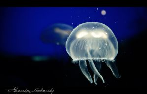 White Jellyfish by 10thapril