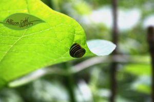 Snail on a Leaf by AllisonDahl