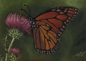 Monarch on thistle by junfender