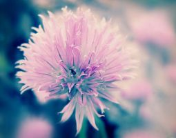 pink. by ThErEaLDoLLyFrikka